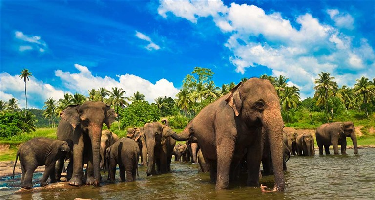 Charming SriLanka